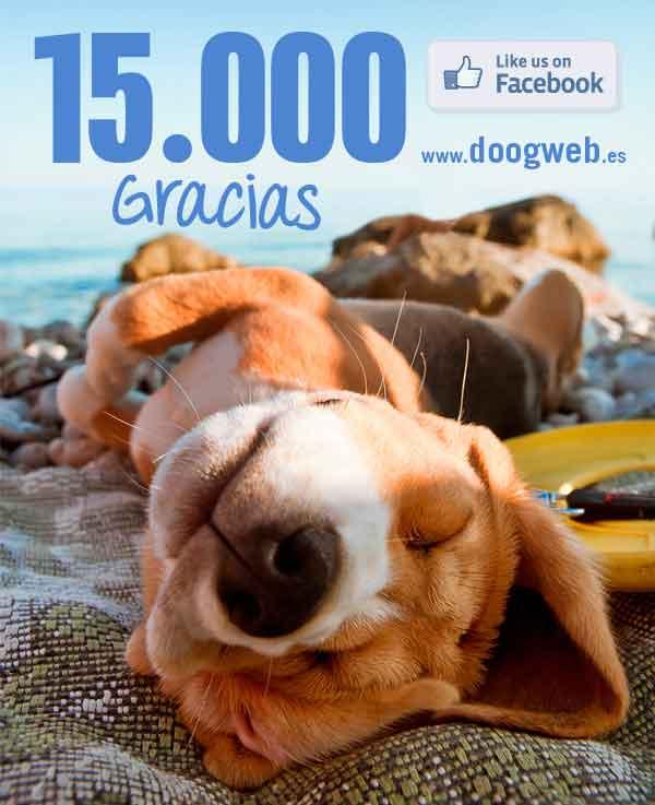 Doogweb y sus cifras (ya somos 15.000, ¡gracias!)