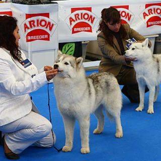 XXX Exposición Canina Internacional de Canarias.