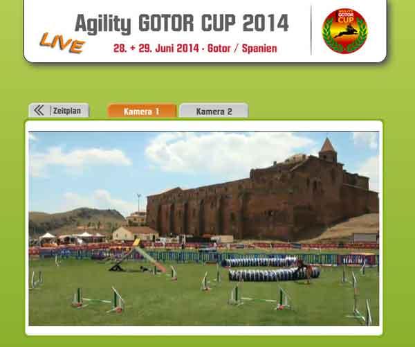 Todo preparado para la Gotor Dog Party, ¡y este año se puede ver la competición de agility online!