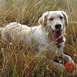 ¿Perros de chalet? 5 ideas para el fin de semana