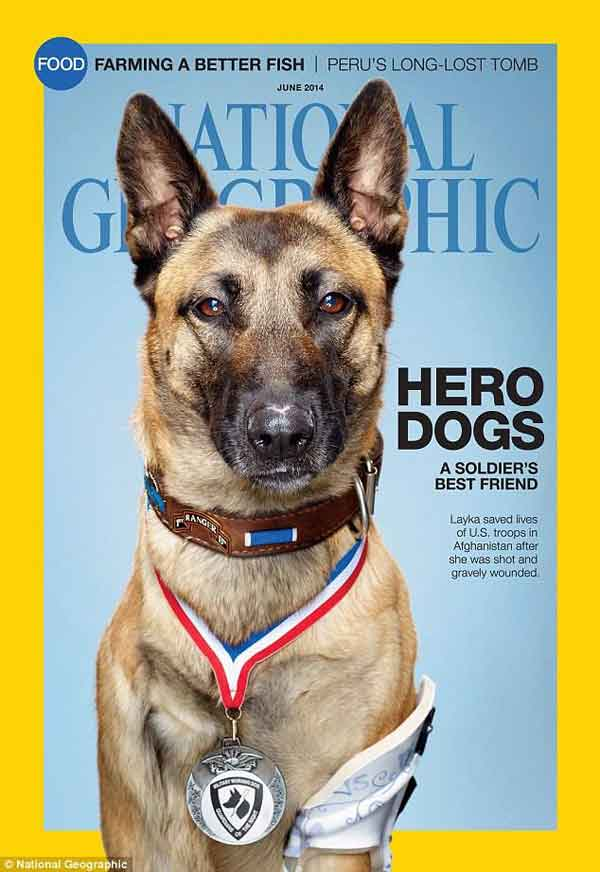 @NatGeo. National Geographic rinde homenaje a los #perros militares en su edición de junio (EE.UU.).