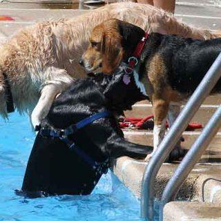 Las rampas para #perros en las piscinas pueden salvar la vida de nuestros perros.
