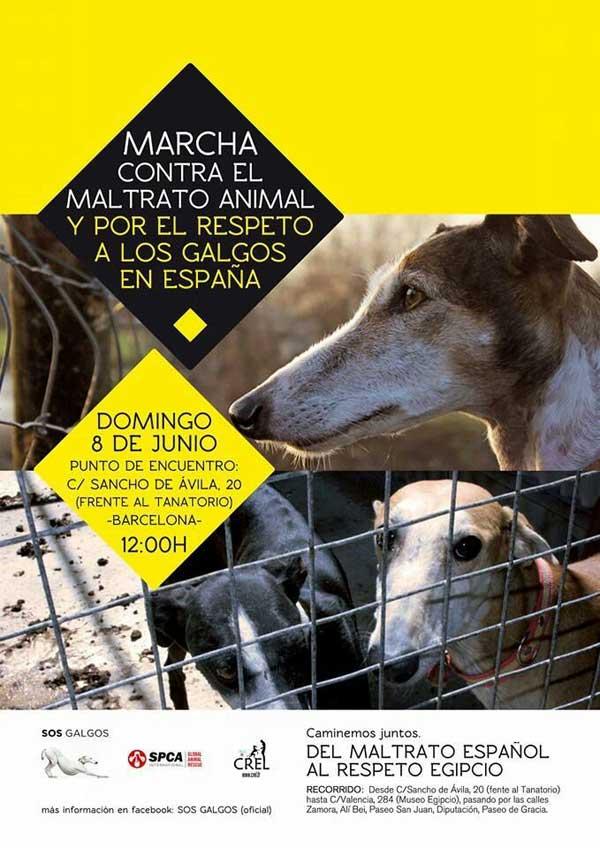@SOSGalgos. El próximo 8 de junio SOS Galgos convoca en Barcelona una marcha para protestar ante la crueldad de la que son víctimas los galgos una vez acabada la temporada de caza. La manifestación tendrá eco en Estrasburgo y posteriormente se hará entrega de una carta de denuncia en el Ministerio de Agricultura.