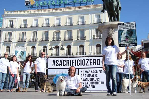 La protectora El Refugio recogerá 50.000 firmas para evitar que se sacrifiquen perros y gatos abandonados en la Comunidad de Madrid