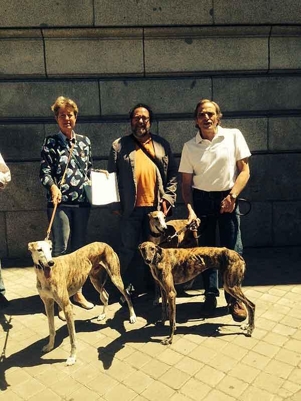 SOS Galgos se manifiesta por el respeto a los galgos en España