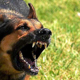 Qué hacer ante el ataque de un #perro. Cómo reaccionar ante un perro agresivo, que nos va a morder, o que ya nos ha mordido.