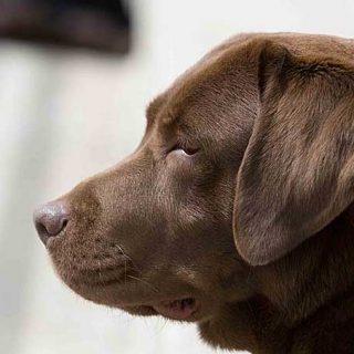 Los celos en los perros, una emoción resultante de un proceso cognitivo complejo que actúa como protección del vínculo social.
