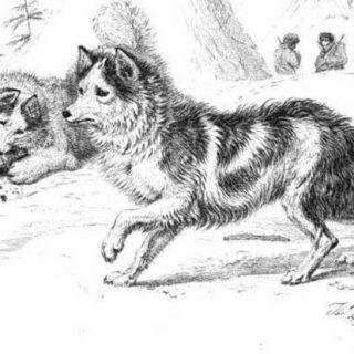 El quiste hidatídico da algunas claves sobre los #perros como compañeros del hombre en el Neolítico.