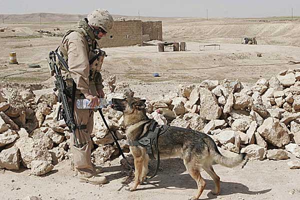 """""""Para los perros, las personas son más importantes que cualquier otra cosa, y ellos confían en nosotros para que les proporcionemos un entorno social estable y predecible. Si ellos sienten que sucede algo inusual, que las personas se comportan de un modo no habitual, harán todo lo que puedan para restablecer el estado de cosas"""". María Goodavage, en su libro """"Perros Soldado""""."""