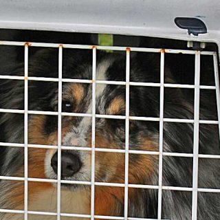 ¡Los perros y gatos no son maletas! ¿Has viajado alguna vez con tu mascota en un avión? Campaña de reclamador.es