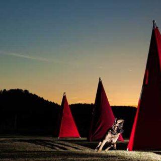 Asmussen Photography. Luz, perros y fotos (fantásticas).