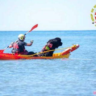 El Grupo De Rescate Mare Nostrum y la Asociación Cinologica Española De Socorrimos Acuático, realizarán una Gran Exhibición de Salvamento acuático canino el domingo 7 de septiembre a las 12:00 horas en Gandía.
