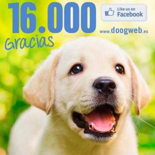 Las cifras de @doogweb ¡16.000 gracias!