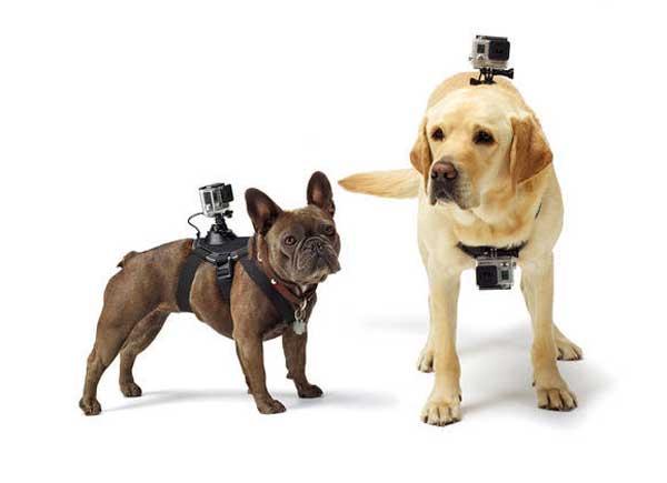"""El arnés Fetch permite """"acoplar"""" una cámara Go Pro a casi cualquier perro."""