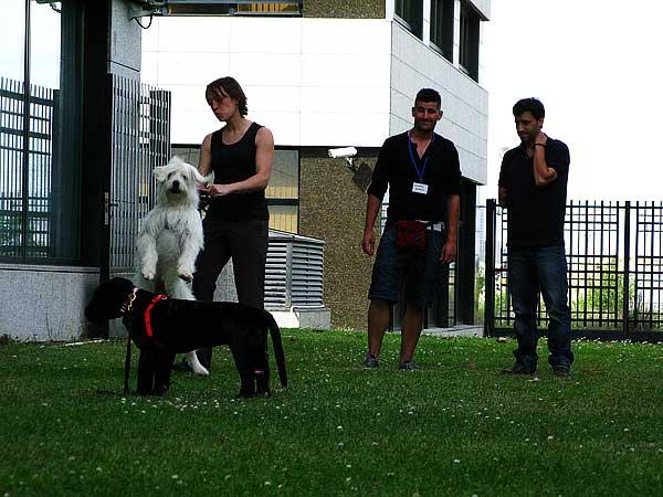 Primer Curso de Instructores BAT en España, próximo mes de octubre (limitado a 12 asistentes con perro y 12 oyentes).