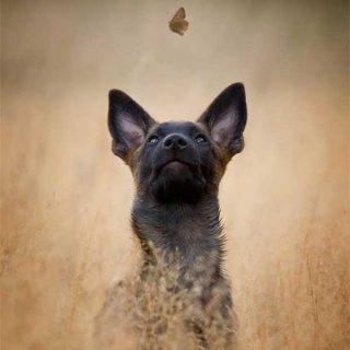Soberbios retratos de perros... Y también Naturaleza, con el fotógrafo alemán As Fokus.