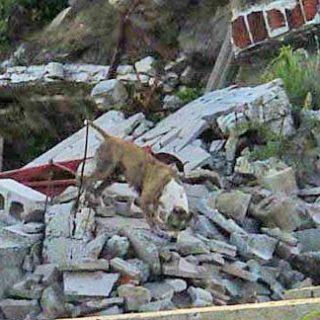 Rescate Canino Método Arcón, Jaime Parejo continúa labor por el salvamento de vidas.