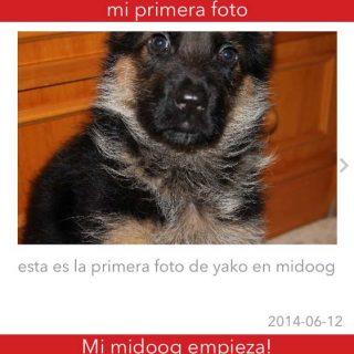 Midoog, nueva app perruna