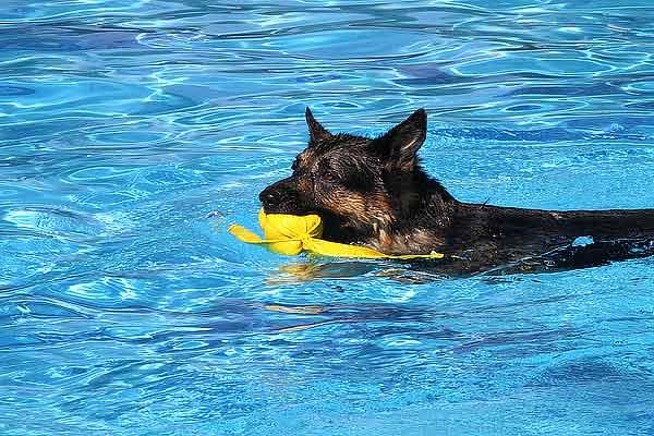 Piscina para perros en daganzo madrid - Piscinas para perros ...