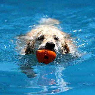 Salpicán, la piscina cien por cien para #perros, volverá a El Casar en septiembre.