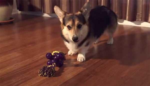 Premios Starmark, los más saludables para los perros.