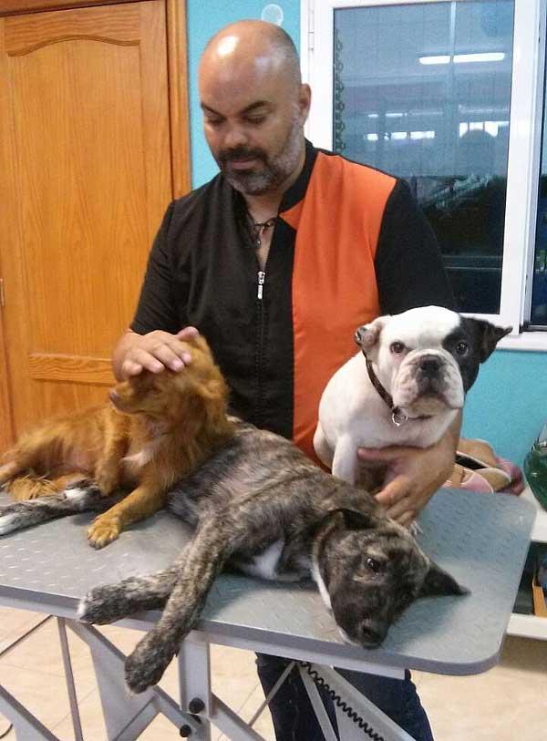 Campaña de 3 días en la que se esterilizarán a 60 perros de la incautación de Fuerteventura.