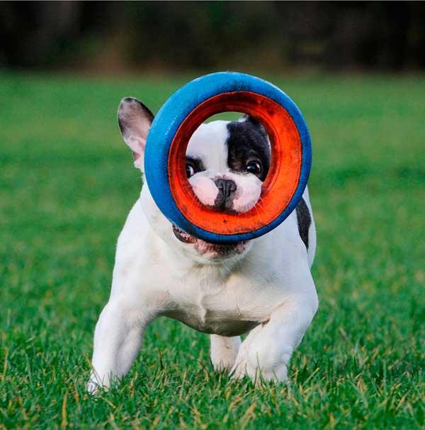 8 consejos Canon para conseguir fotos espectaculares de tus mascotas