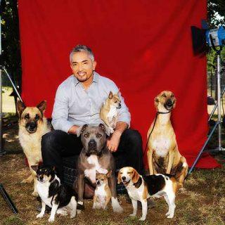 """¿César Millán prohibido en Alemania? Pues no exactamente, ha """"suspendido"""" un examen para manejar perros."""