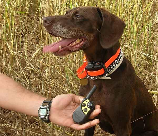 Efectividad en el adiestramiento, cortisol, estrés... El collar eléctrico en los perros y sus consecuencias (estudio científico).