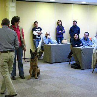 Muchos (demasiados) cursos y seminarios caninos... ¿cómo elegir bien?