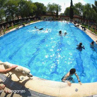 """@doganzo @fotopets. Éxito de """"Al agua patas"""", piscina para perros en Daganzo."""