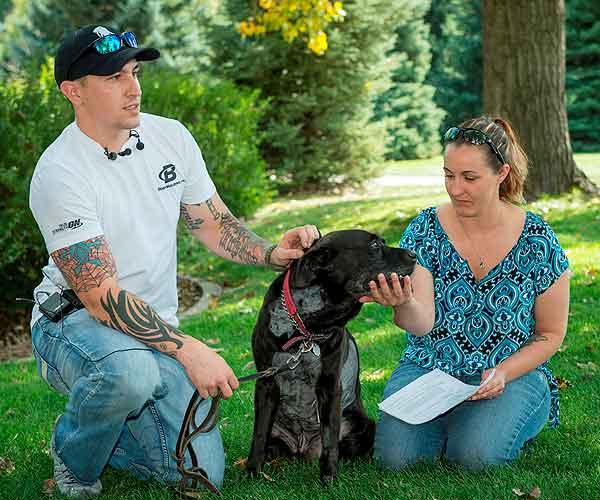 La historia de Kay, un perro detector de explosivos, mestizo de pit bull y labrador, e su lucha contra un tumor de corazón.