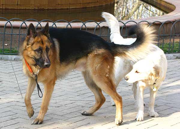 """Razas (y perros) que """"caen mal"""" a otros perros. ¿Por qué sucede?"""