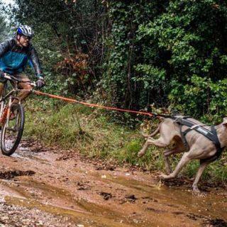 1er Triatlón Canino a Moià.