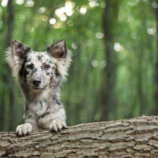 Fotografía de #perros, con estilo propio (retratos, estudio, acción...).