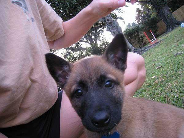 Socialización Positiva Proactiva y Exposición del cachorro