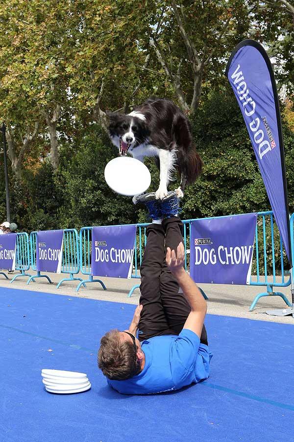 Diversión y solidaridad con las mascotas en Dog Chow Super Park.