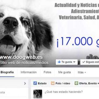 ¡Somos 17.000 doogweber@s!