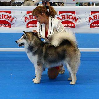Exposición Canina Valls 2014, próximo fin de semana en Recinto KURSAAL (Antigua Fábrica Starpan), en Valls (Tarragona) .
