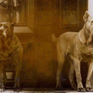"""¿La raza de los perros predice el """"carácter"""" futuro? No todos los perros de cualquier raza serán buenos perros de compañía."""