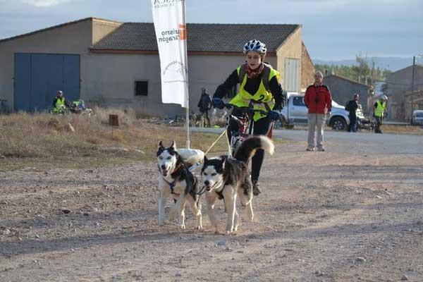 El Club de Mushing Monegros presenta la tercera edición de la Carrera de Fuentes Claras con perros de tiro, que se celebrará en la localidad turolense los días 1 y 2 de noviembre de 2014.