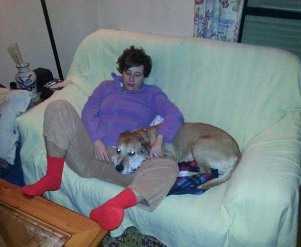 Piden paralizar el sacrificio del perro de la enfermera con ébola
