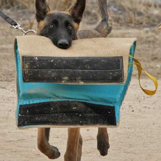 El adiestramiento del perro deportivo, su verdadero secreto es...