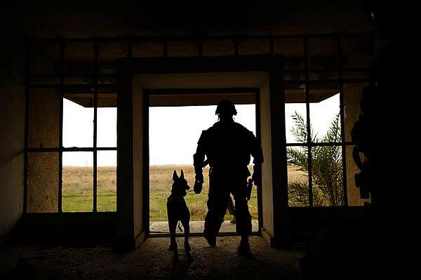 Perros militares, los perros más completos del mundo (vídeo).