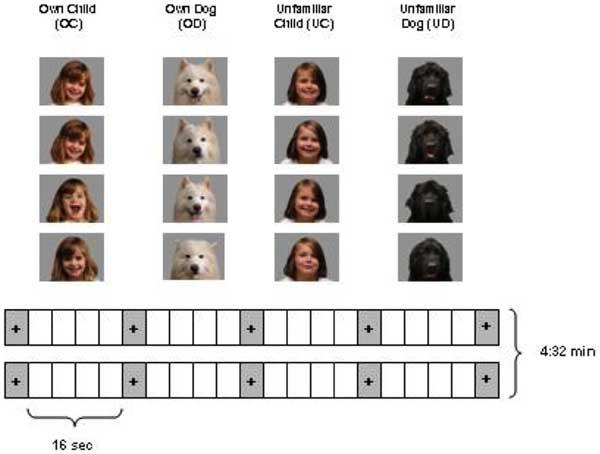 La resonancia magnética demuestra que queremos a los perros como a hijos