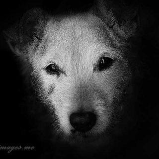 """Perros en blanco y negro (y más). """"Lo mejor de ser fotógrafo es que estás creando recuerdos"""", Daz Corbett."""