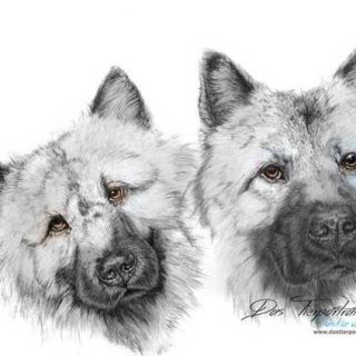 Los increíbles retratos de perros de Saskia vom Salzhaff (a lápiz).