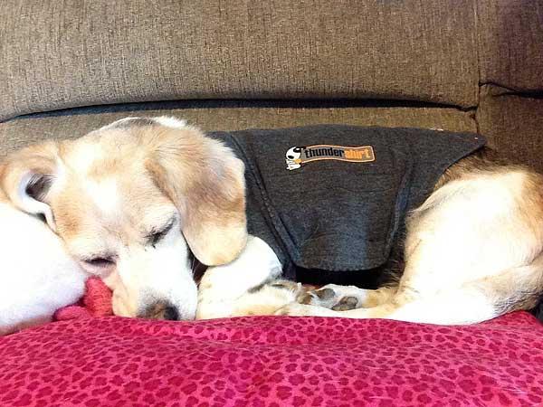 ¿Perros y petardos en Halloween? Las chaquetas anti ansiedad Thunder shirt y Anxiety Wrap, con sus diseños patentados, aplican una presión, suave y contante que induce un efecto calmante en la mayoría de los perros.