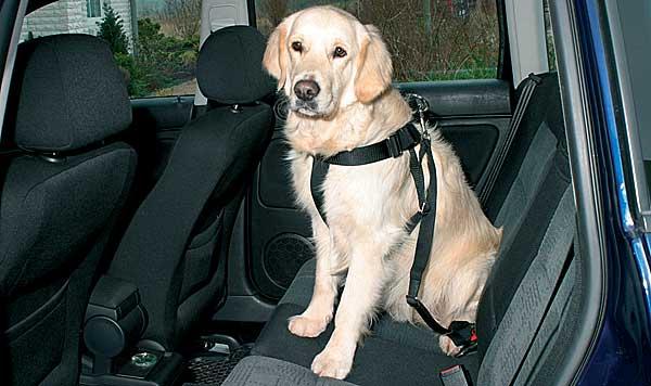 Viajes en coche con nuestros perros (infografía).