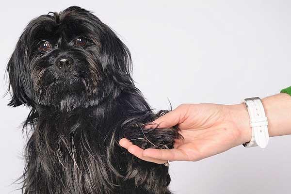 Los perros tienen sentimientos, inteligencia, nos dan muchas alegrías… Pero no son seres humanos y no deben alimentarse como tales...